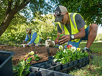 NWA Democrat-Gazette/BEN GOFF @NWABENGOFF<br /> Raymont Lorennij with a crew from Springdale Public Works plants flowers Monday, Oct. 8, 2018, along the Razorback Regional Greenway in downtown Springdale.