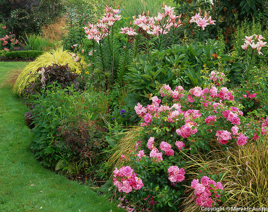 Vashon Island, WA:  A garden featuring a pink double knock out rose (Rosa radtkopink) pink lilies (Lilium sp) and Japanese forest grass (Hakonechola macra 'Aureola')