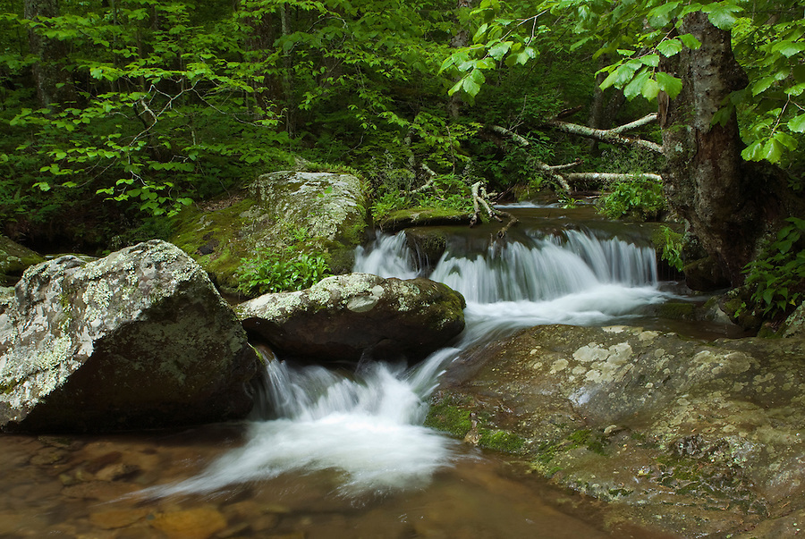 Small water falls on Mill Prong Branch in Shenandoah National Park, Virginia.