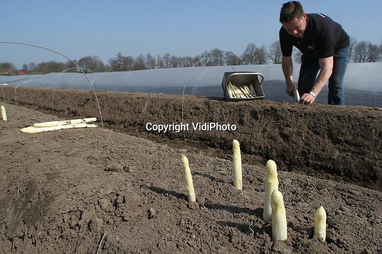 Foto: VidiPhoto..SINT MICHIELSGESTEL - Aspergeteler Peter van de Ven uit het Brabantse Sint Michielgestel steekt maandag zijn eerste asperges van de koude grond. Nog niet eerder zijn er zo vroeg in het voorjaar buiten asperges gestoken. Dankzij het warme voorjaarsweer en het wegblijven van maartse buien, zetten de asperges er een flinke groeispurt in. Door het bijzondere ecosysteem in de bodem van Van de Ven, de uitgekiende mineralenbalans en het gebruik van zeezout, heeft de Brabantse teler een hogere opbrengst per hectare, en zijn zijn aspergers smakelijker, gezonder en sterker..