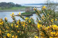 Die Burg wurde ca. 1320 als kleine Befestigung vom Clan MacDougall, den damaligen Lords of Lorn, errichtet.<br /> Castle Stalker ist nahezu authentisch renoviert und gilt als einer der am besten erhaltenen mittelalterlichen Wohntuerme im Westen von Schottland. Es ist Bestandteil der &quot;Lynn of Lorn National Scenic Area&quot;.<br /> Die Niederungsburg steht auf einer kleinen, felsigen Gezeiteninsel im Loch Laich, einer Bucht des Loch Linnhe, etwa auf halbem Weg zwischen Oban und dem Glen Coe in den westlichen schottischen Highlands. Sie ist mit dem Boot, bei Ebbe auch zu Fuss zu erreichen.<br /> Bekannt ist Castle Stalker aus der Schlussszene des Kinofilms &quot;Die Ritter der Kokosnuss&quot; der englischen Komikertruppe Monty Python als Gralsburg &quot;Schloss von Aaaaaaaargh&quot;.<br /> 2.5.2008, Oban/Schottland<br /> Copyright: Christian-Ditsch.de<br /> [Inhaltsveraendernde Manipulation des Fotos nur nach ausdruecklicher Genehmigung des Fotografen. Vereinbarungen ueber Abtretung von Persoenlichkeitsrechten/Model Release der abgebildeten Person/Personen liegen nicht vor. NO MODEL RELEASE! Nur fuer Redaktionelle Zwecke. Don't publish without copyright Christian-Ditsch.de, Veroeffentlichung nur mit Fotografennennung, sowie gegen Honorar, MwSt. und Beleg. Konto: I N G - D i B a, IBAN DE58500105175400192269, BIC INGDDEFFXXX, Kontakt: post@christian-ditsch.de<br /> Bei der Bearbeitung der Dateiinformationen darf die Urheberkennzeichnung in den EXIF- und  IPTC-Daten nicht entfernt werden, diese sind in digitalen Medien nach &sect;95c UrhG rechtlich geschuetzt. Der Urhebervermerk wird gemaess &sect;13 UrhG verlangt.]