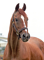 Little Current (by Sea Bird) at age 30, Monroe, Washington, 2001 Little Current (Sea Bird) winner 1974 Preakness and Belmont Stakes and champion 3-year-old, in Monroe, Washington