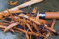 Die Rinde von Schlehenwurzeln wird mit einem Messer abgeschält, Wurzelernte, Ernte von Schlehenwurzeln, Rinde von Schlehenwurzeln, Schlehenwurzel, Schlehen-Wurzeln, Schlehen-Wurzel, Wurzeln, Wurzel, Rinde und Wurzeln von Schlehe, Wurzelrinde, Wurzel-Rinde, Gewöhnliche Schlehe, Schwarzdorn, Prunus spinosa, Blackthorn, Sloe, root, roots, Epine noire, Prunellier