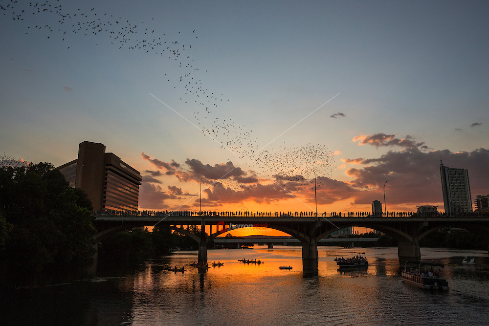 The Congress Avenue Bat Bridge spans Town Lake in downtown Austin and is home to the largest urban bat colony in North America. The colony is estimated at 1.5 million Mexican free-tail bats.