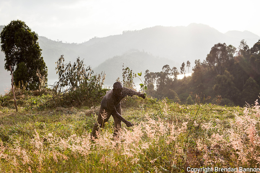 """""""In the beginning I lived in Bisesero. I met my wife and fell in love right away. We came here to find work. A woman hired me to plant  trees. Among many I was chosen for the job of caretaker here. 'You can stay here, work for me and cultivate this land,"""" she told me. """" I keep the place clean and beautiful. What gives  me joy is seeing my family every morning and working for thier well being. Life is hard but we live by the lake and everyday we can get fish- Ndugu and Sambaza- Ndugu are not tasty but good for the children. Sambaza are best for the taste. I am happy living in a beautiful place where people stop to speak with us. Some even take pictures and show me the screen and say 'Look- you live in such a beautiful place.' I want to marry my wife but for that we need money. It'll cost a bit - 12,000 Francs ($18) for a civil ceremony. But with 50,000 Francs ($74) we could go home after and share drinks with friends and wear new clothes"""" - Aphrodise Bakunzibacye Kibuye, Rwanda. Lake Kivu shore. Photo by Brendan Bannon March 1, 2014."""
