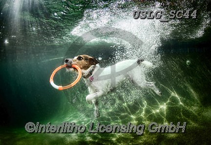 REALISTIC ANIMALS, REALISTISCHE TIERE, ANIMALES REALISTICOS, dogs, paintings+++++SethC_LULU_WATER_MG_9176BOOK,USLGSC44,#A#, EVERYDAY ,underwater dogs,photos,fotos ,Seth