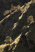 Walia Ibex on the steep mountain slopes of the Simien Mountains
