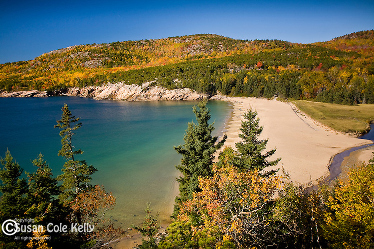 Autumn at Sand Beach, Acadia National Park, ME, USA