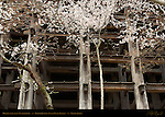 Scaffolding supporting Hondo Main Hall and Butai Dancing Stage, Kiyomizudera Clear Water Temple, Kyoto, Japan