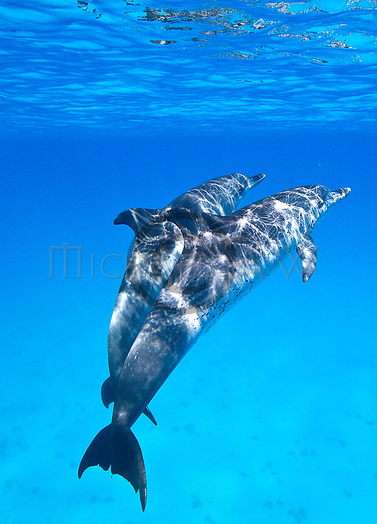 Bahamas, Sharks and dolphins