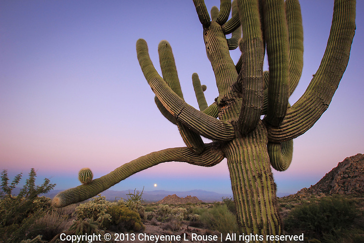 Saguaro Moon - Arizona - Hunters Moon - Full Moon