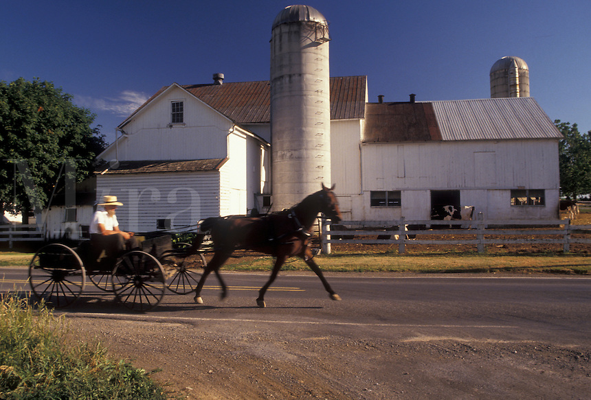 AJ2767, Amish, Pennsylvania, Lancaster County, Pennsylvania Dutch Country, Amish horse and open buggy trotting down a country road past a farm in Lancaster County in the state of Pennsylvania.