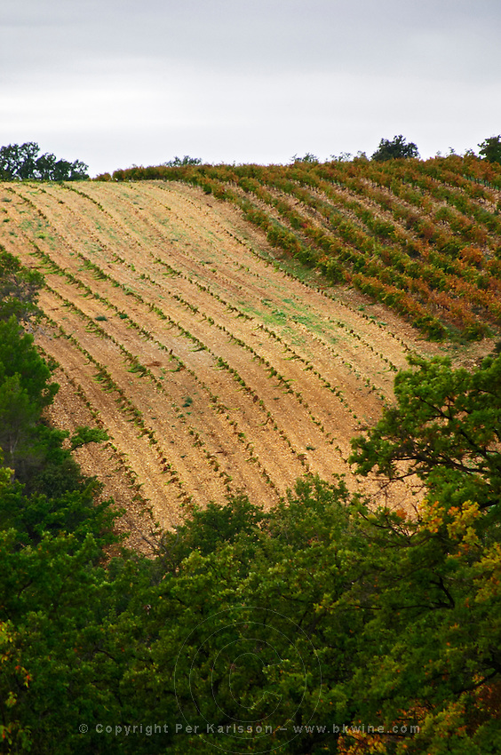 A newly planted vineyard. Domaine Viret, Saint Maurice sur Eygues, Drôme Drome France, Europe