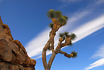 joshua tree,rocks and clouds