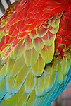 Macaw parrot feathers.