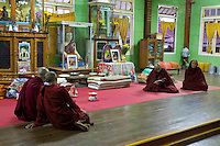 Myanmar, Burma.  Buddhist Monks, Early Morning Reading, Alodaw Pauk Pagoda, Nampan Village, Inle Lake, Shan State.
