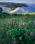 Tillamook Count, OR<br /> Hairy checker mallow (Sidalcea hirtipes) and manroot (Marah oreganus) on a prairie of Cascade Head above the mouth of the Salmon River and Oregon headlands