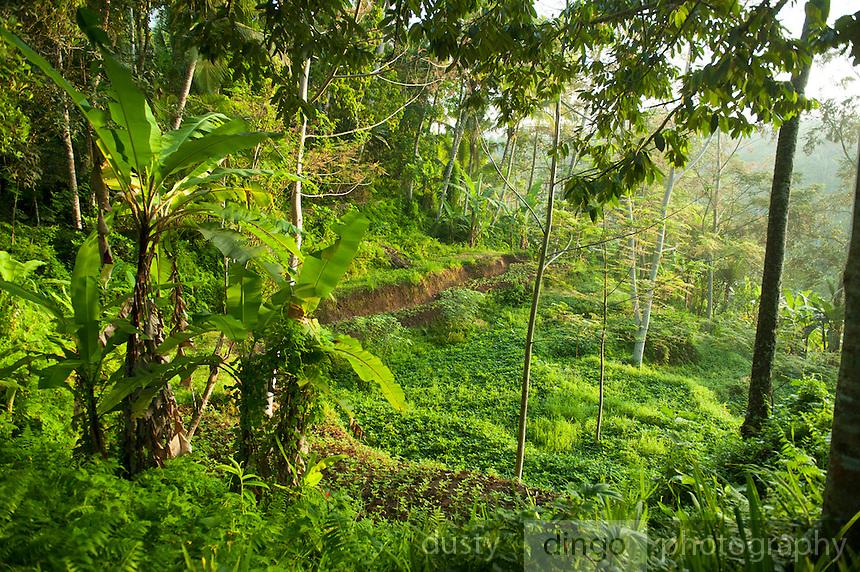 the view as we walk to/from our villa at Alam Sari, Keliki, Bali