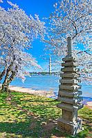 Washington DC, Japanese Stone Pagoda, Tidal Basin, Nations Capital, Cherry Blossom trees,