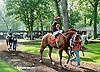 Don Cavallo before The Nick Shuk Memorial Stakes at Delaware Park on 8/29/2013