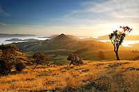 Otago New Zealand Images