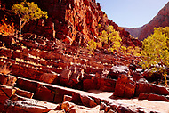 Image Ref: CA546<br />