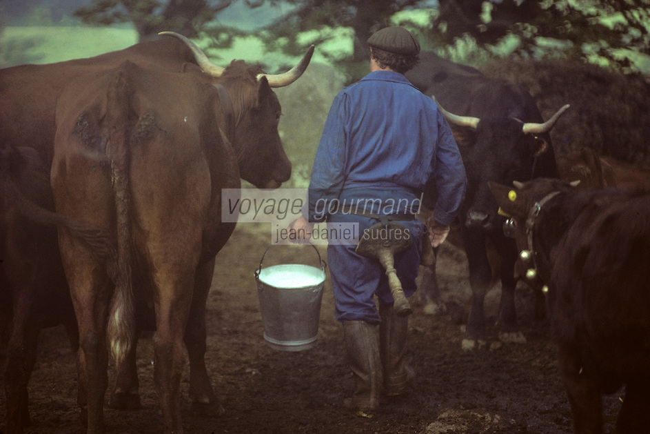 Europe/France/Auvergne/15/Cantal/env de Mandailles : Traite des vaches de race Salers au buron pour la préparation en estive du fromage AOC Cantal [PHOTO D'ARCHIVES // ARCHIVAL IMAGES<br /> FRANCE 1980