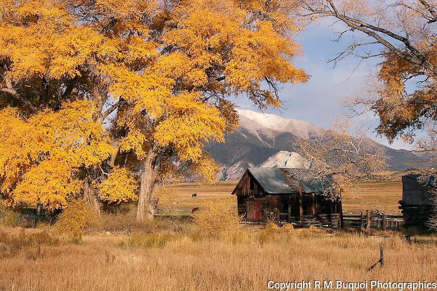 Old Cabin and Fall Color in Colorado