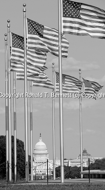 US Flags fly, Lincoln Memorial, Washington Monument, US Capital, United States Capital with flags, US flags, Lincoln memorial and washington monumnet, Washington DC, District, DC, capital, Potomac River, Washington Metropolitain, metropolitan area, federal district, federal government of USA, US Congress, White House, National Mall, Politics in the United States, Presidential, Federal Republic, united States Congress, powers, Judicial Power, House of Representatives, US Senate, Consitiution, federal law, Democratic Party, Republican party, two party system,