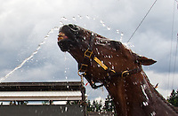 Tee Time, a Tennessee Walker who just competed as a performance horse in the Northwest Walking Horse Classic in Spanaway, Wash. on July 11, 2015 relishes in a hose down immediately following his performance. Tee Time is forced to wear heavy pads on his hooves, a brace in his tail and chains around his ankles while showing in his class. (© Karen Ducey Photography)