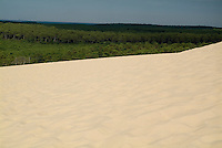 Landes Forest seen from the Great Dune of Pyla, France.