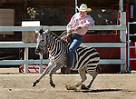 Aryn Hedrick rides an African zebra on Friday, Sept. 10, 2010 during the 51st Annual Virginia City International Camel Races in Virginia City, Nev..Photo by Cathleen Allison