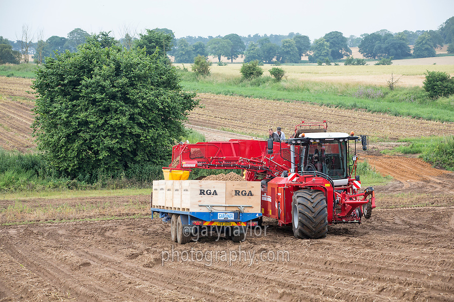Lifting Maris Peer with a Grimme Varitron 270 - Suffolk, July