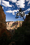 Blue sky and clouds over the Grand Canyon in Arizona which is framed by shadows of trees and vegetation, United States of America.