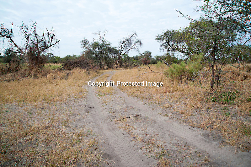 Sandy Track in Moremi Animal Reserve in Botswana in Africa
