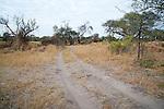 Sandy Track in Moremi Animal Reserve in Botswana in Africa
