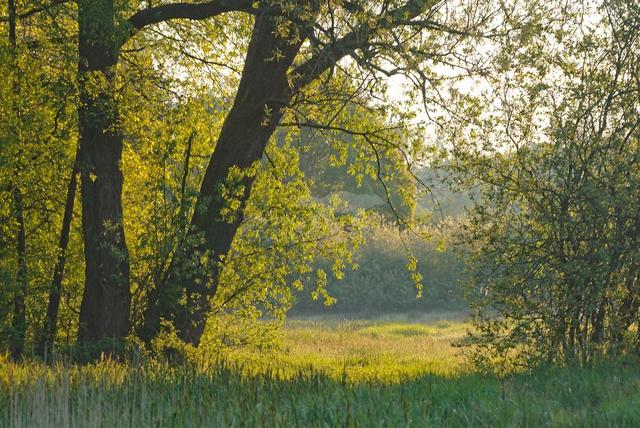 Coulissen landschap, Haanwijk
