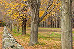Fall colors the Lincoln Conservation Land in Lincoln, Massachusetts, USA