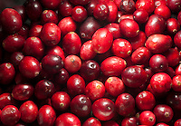 Close-up of Cranberries, Whitewell, Lancashire.