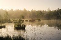 """Moorweiher, Moor, Weiher, Tümpel in einem Moor, Hochmoor, Morgenstimmung im """"Kaltenhofer Moor"""", Schleswig-Holstein, Deutschland"""