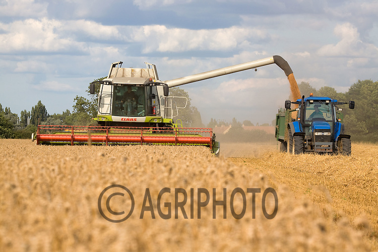 Claas Combine Harvesting Barley In Lincolnshire