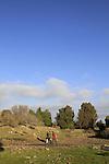 Golan Heights, Ein Asaniya at Bashanit ridge nature reserve