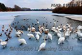 Marek, CHRISTMAS LANDSCAPES, WEIHNACHTEN WINTERLANDSCHAFTEN, NAVIDAD PAISAJES DE INVIERNO, photos+++++,PLMP01036P,#xl#