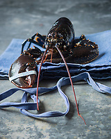France, Manche (50), Cotentin,  Homard du Cotentin  et de Jersey// France, Manche, Cotentin,  Cotentin and Jersey lobsters <br /> - Stylisme : Valérie LHOMME