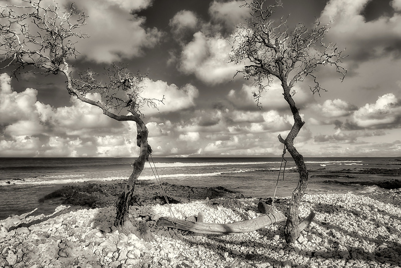 Driftwood swing. Along the Kohala Coast. Hawii The big island.