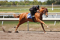 #157Fasig-Tipton Florida Sale,Under Tack Show. Palm Meadows Florida 03-23-2012 Arron Haggart/Eclipse Sportswire.