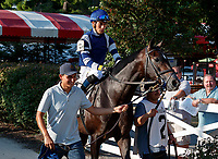 Joyful Heart in the post parade as Opry (no. 8) wins the With Anticipation  Stakes (Grade 3), Aug. 29, 2018 at the Saratoga Race Course, Saratoga Springs, NY.  Ridden by  Javier Castellano, and trained by Todd Pletcher, Opry finished 1 1/2 lengths in front of Somelikeithotbrown (No. 7).  (Bruce Dudek/Eclipse Sportswire)