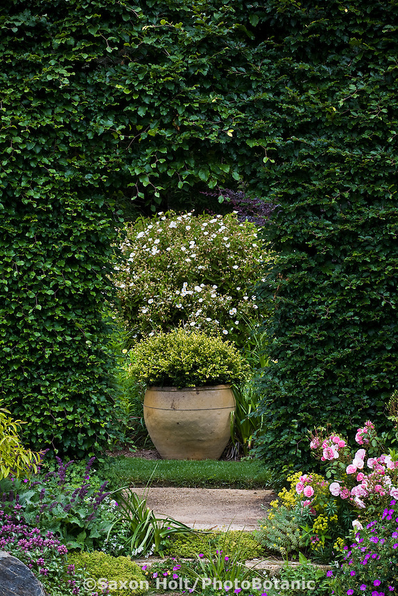 Thyme covered steps through Beech hedge (Fagus sylvatica) to hidden garden border with container focal point and white Cistus;  Digging Dog Nursery