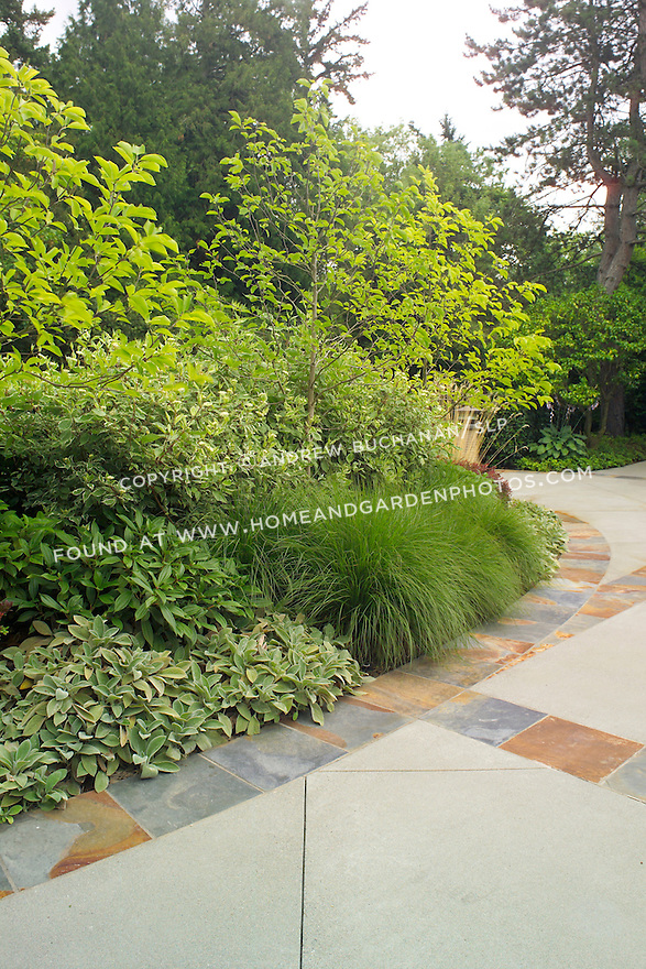 The edge of a professionally-landscaped driveway near Seattle boasts decorative slate tiles edging a poured concrete driveway, backed by a privacy hedge of mixed trees, shrubs, and ornamental grasses including dogwoods and viburnum.