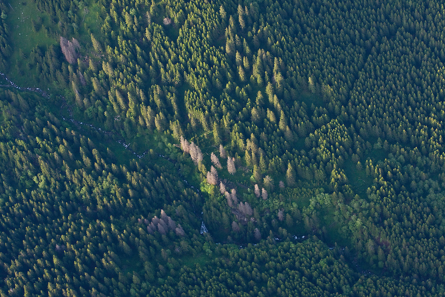 Aerial view of mountain stream between mountain forest with Spruce (Picea abies) and Ash (Sorbus aucuparia) and Dwarf pine (Pinus mugo) zone. Western Tatras, Slovakia. June 2009. Mission: Ticha